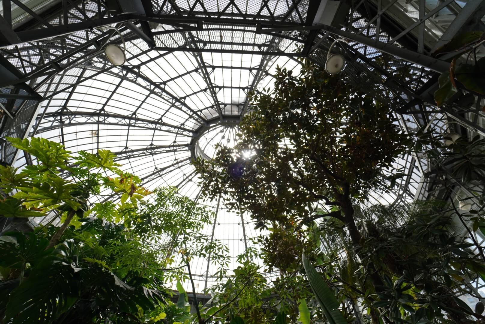 Allan Gardenの天井